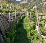 Roccese il vino coltivato sulla roccia