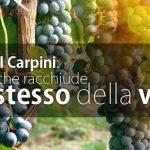 Cascina I Carpini
